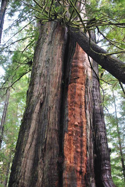 Why Cedar?